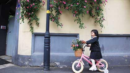 漫步颐和路 慢赏蔷薇花