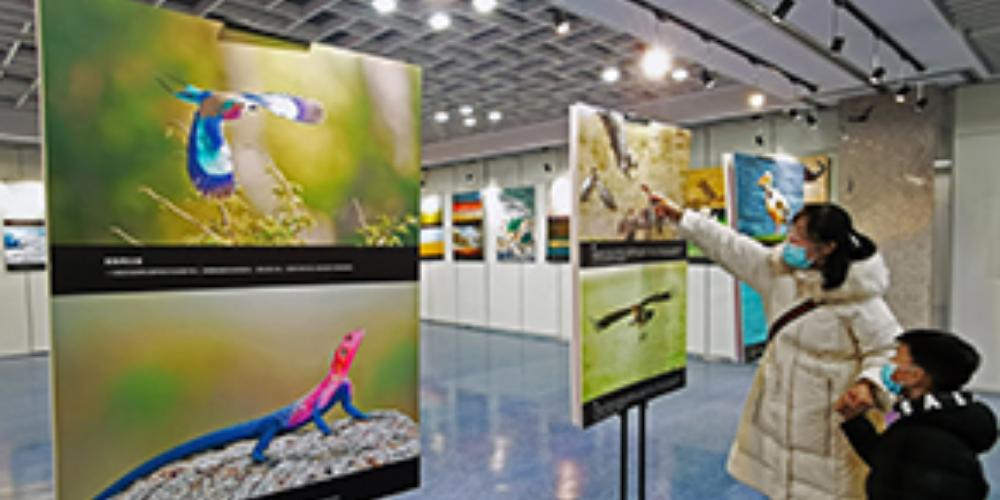 野生動物圖片展吸引市民打卡