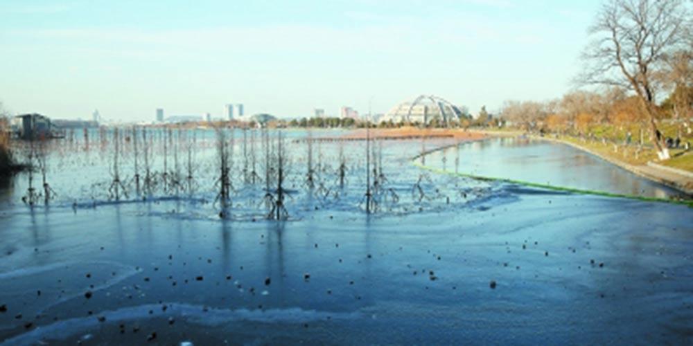 玄武湖部分湖面结冰