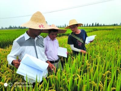 南京水稻种质资源国家野外科学观测研究站的工作人员在采集数据。 通讯员 楠侬宣摄