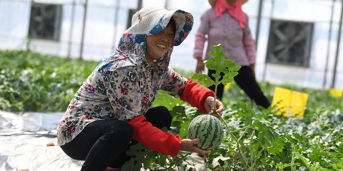 新技术赋能、新业态壮大、新模式涌现 南京现代农业勇攀高峰