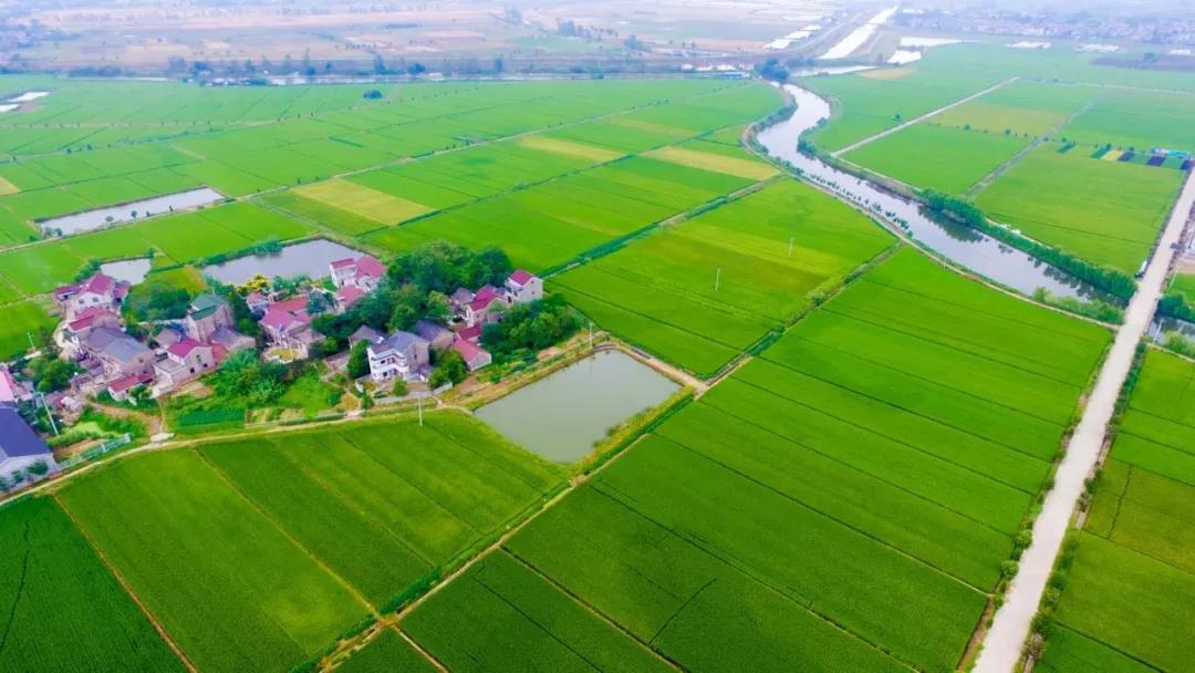 南京高标准农田建设与美丽乡村打造相结合,风景如诗如画。溧水区农业农村局供图